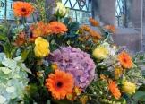 Harvest Flowers 2015 (5)