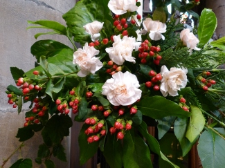 Harvest Santuary 2015 (2)
